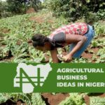 10 HIGHLY PROFITABLE AGRICULTURAL BUSINESS IDEAS IN NIGERIA
