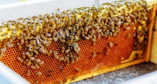 SALE OF HONEY, AGRICULTURAL BUSINESS IDEAS IN NIGERIA