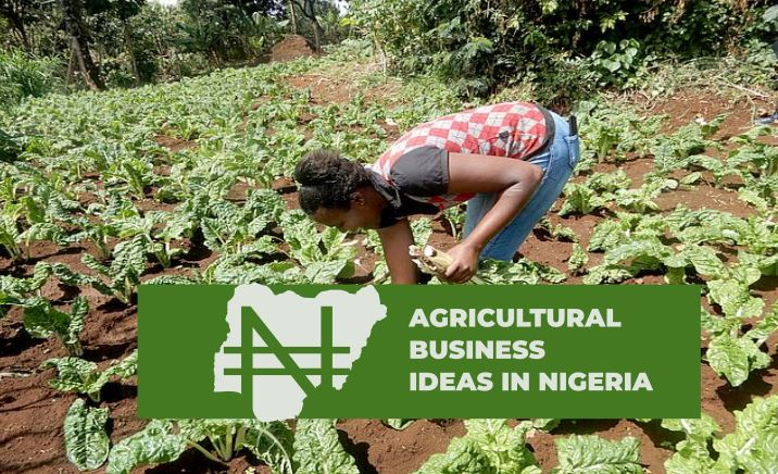 AGRICULTURAL BUSINESS IDEAS
