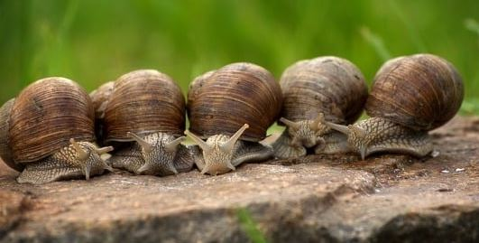 Growing Snails, Agribusiness in Nigeria