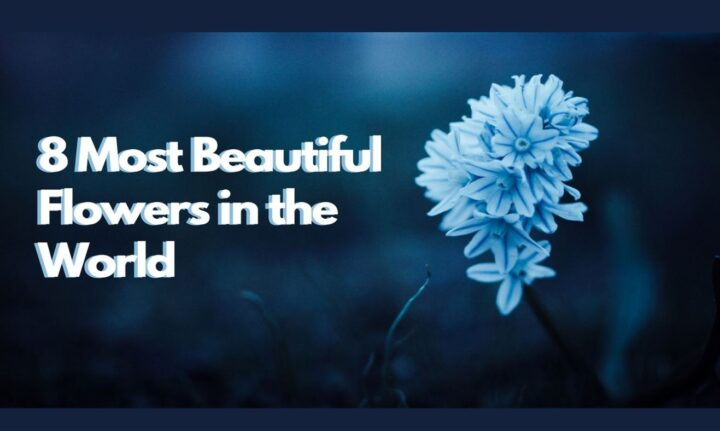 Most Beautiful Flowers, Most Beautiful Flower, Beautiful Flowers, In The WorldMost Beautiful Flowers In The World